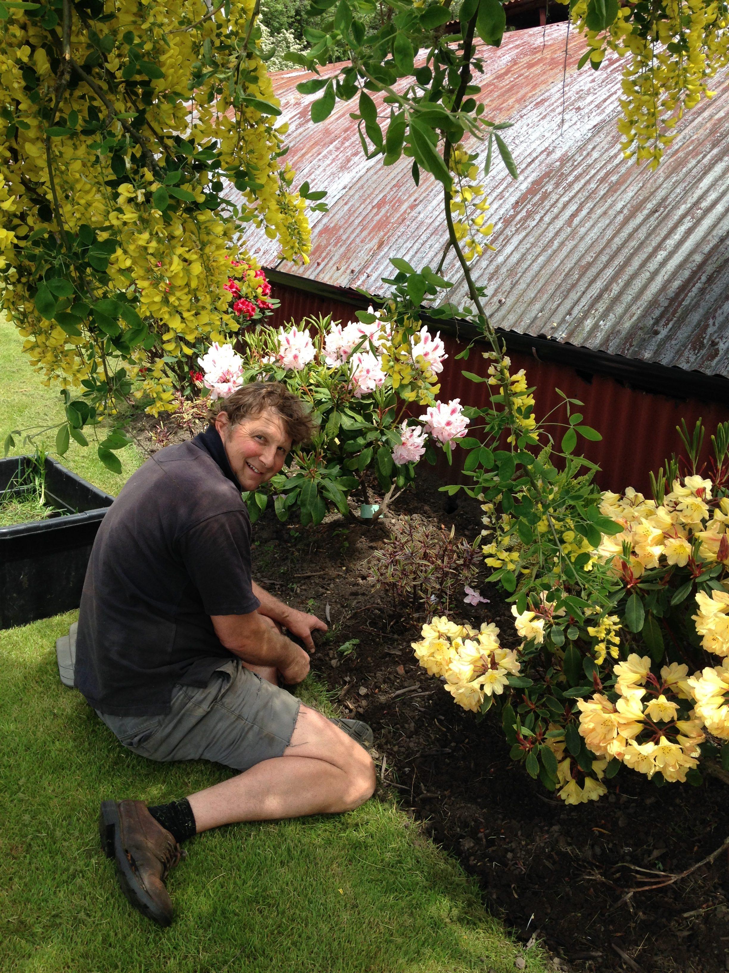 Robin gardening